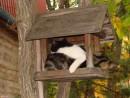 08.Гнездо для котят.