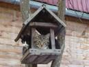 09.Птицы улетели &emdash; котята прилетели.