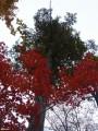 11.Зеленое и красное.