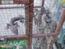 ящерки это уже взросленькие, те что поменьше бегают повсюду — предпочитают побеленные потолки