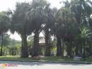 пальмищи