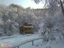 «Бархатная» в снегу