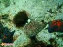Получил недавно консультацию по подводной съёмке,  теперь не пользуюсь вспышкой.Пусть не очень резко но зато без светящегося планктона.