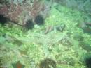 """Дайв-центр """"Nautilus"""": Подводные экскурсии (Витязь, Андреевка)"""