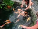 прогулка в аквариум ПОДВОДНЫЙ МИР