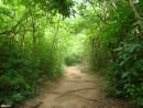 на острове Ко-Чанг
