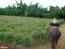 поездка на слонах в деревню слонов