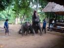 деревня слонов