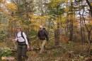 около часа ходьбы и сворачиваем влево, не доходя до Грибановки